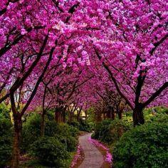 Qué hermosa creación de Dios!!!