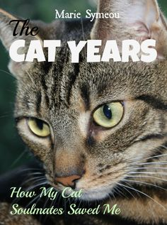 New Book Cover for my Memoir -  #cats #catbooks #catmemoir #memoirs