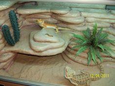 Bearded Dragon Habitat Ideas - Page 4 - Reptile Forums Bearded Dragon Enclosure, Bearded Dragon Cage, Bearded Dragon Habitat, Dragon Pet, Baby Dragon, Water Dragon, Bartagamen Terrarium, Terrarium Ideas, Reptile Terrarium