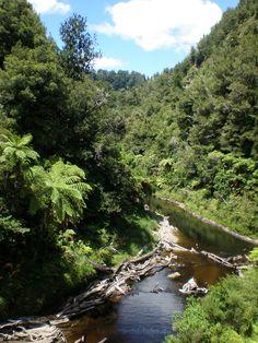 Mitten im #Dschungel von #Neuseelands #Nordinsel