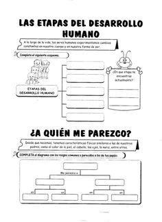 Etapas del desarrollo humano: Ciencias 2do
