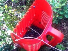 Loppi en Etelä-Suomen Lääni, Cosas para hacer: ir al bosque a recoger moras! Things to do: go to the forest to pick up berries!
