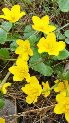 Bekkeblom Wildflower Tattoo, Wild Flowers, Garden, Plants, Pictures, Garten, Wildflowers, Lawn And Garden, Gardens