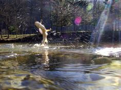 #flyfishing #fish #muharjenj #lipan #grayling #wather#voda#artphoto…