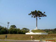 Pinheiro  - Simbolo do Paraná