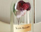Decorative Crochet Viola Flower Bottle