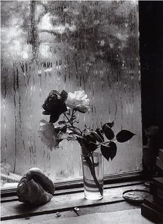 Roses (picture by Robert Doisneau)