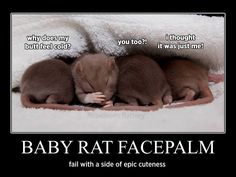 Baby rat facepalm