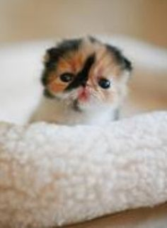 8 Best Too Cute Images On Pinterest