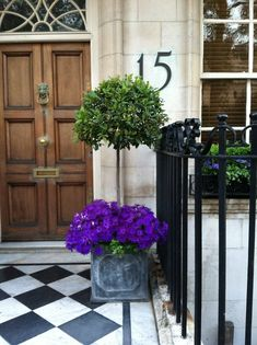 Zinc planters with topiary and purple flowers (annuals? Front Door Planters, Zinc Planters, Front Door Decor, Bay Tree Front Door, Window Planters, Front Doors, Ficus, Purple Flowering Tree, Topiary Trees