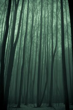 writing inspiration | Writing Inspiration♥ / forest mist