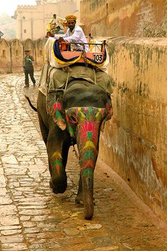 indiaincredible:    Ride an elephant in india (by Real Gap )