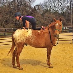 Pin for Later: This Awkward Horseback Yoga Trend Is Actually Quite Amazing Lizard Pose Variation