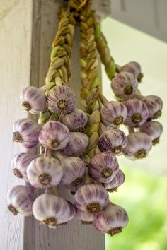 How to Braid and Cure Fresh Garlic - The Prudent Garden