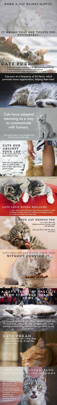 What is your cat trying to say? This breaks down common kitty behaviors to let you understand.