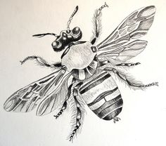 bee dravwings | bee drawing | Flickr - Photo Sharing!