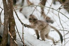 Snow babies – cutest animals in the snow – in pictures
