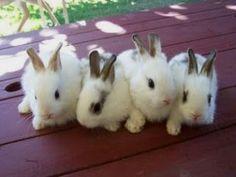 Delightful rabbit
