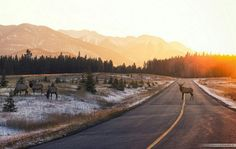 Rise & Shine (26 Photos) - outdoors nature mountains landscapes hiking dogs coffee camping cabins breakfast