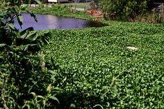 New Orleans Community Gardens for Wilder Quarterly