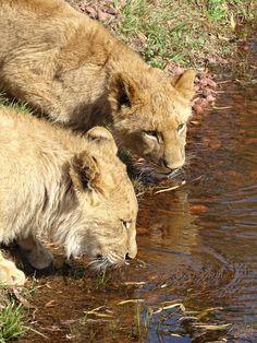Altijd willen weten hoe het is om op safari te gaan? Lees het op www.travelwithmel.nl