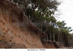 crumbling-cliff-face-and-exposed-tree-roots-caused-by-coastal-erosion-bd4p9n.jpg (640×447)