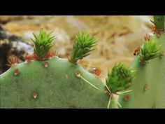 Saguaro National Park - YouTube