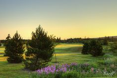Right on number 4 hole. Newfoundland, Maine, Vineyard, Golf Courses, Wedding Venues, Number, Sunset, Outdoor, Wedding Reception Venues