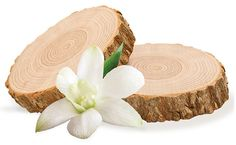 Sandalwood is one of the major remedy in Ayurvedic treatment medicines. The main use of sandal woods in Ayurveda is to sedate the nervous system by subduing nervousness, anxiety ,for the treatment of Insomnia and also used for reducing the nerve pain. The daily use of sandal wood is excellent for skin care. As massage oil, it can be rubbed over reproductive organs for bladder infection.