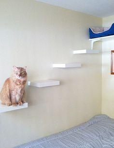 Estanterias para gatos DIY II                              …                                                                                                                                                                                 Más