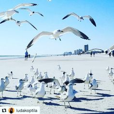 It's finally Friday! Was this the longest week ever?  I feel free! Thanks to @ludakoptila for this lovely #jacksonville beach seagull inspiration. They look how I feel today! #friday #beach #birds #jax #florida