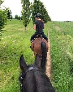 Cute Horses, Horse Love, Horse Girl, English Riding, Horse Riding, Ponies, Beautiful Creatures, The Great Outdoors, Ideas Para