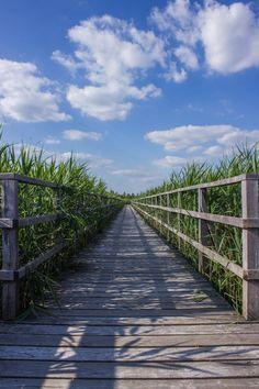 Free download of this photo: https://www.pexels.com/photo/boardwalk-bridge-cloud-clouds-276272/ #wood #road #landscape