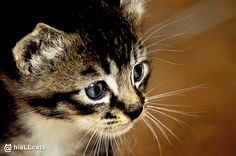 So pretty! #kitty #cats #cute #cat