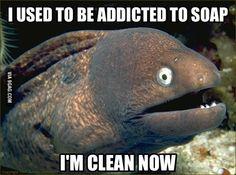 Bad joke eel: addicted to soap