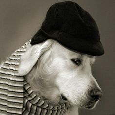 Dog Fashion Show  -  animals clothes, animals in human clothes