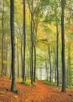 facebook page landscape photography   Beech Forest Trail, Bavaria