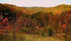 Cabwaylingo State Forest in Dunlow, WV