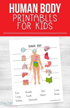 My son loves learning about the human body so I created these human body printables for kids to introduce him to the major organs in the body. A fun overview of the entire human body, have you tried it with your kids? These free human body printable worksheets are fun way to learn about the human body organs.#science #biology #humanbody #kindergartenscience #homeschoolscience #LivingLifeandLearning