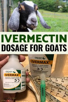 Ivermectin is a medication given to goats to treat internal parasites. Learn the correct Ivermectin dosage for goats & how to give the medication correctly. Feeding Goats, Raising Goats, Raising Farm Animals, Boer Goats, Pigmy Goats, Mini Goats, Goat Shelter, Show Goats, Goat Care