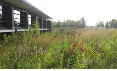 This visually stunning landscape contrasts sweeping plantings of native prairie, pond, and wet meadow species with a modern library building raised on stilts above the rain water storage pond.