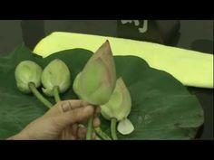 lotus fold