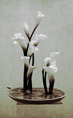 White Calla Lily Ikebana by Kelly D Brown (aka Kel Surprise!), via Flickr