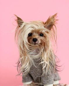 Meet Willamina (aka Williecute), the furry faced pup with dozens of stylish hairdos. With her long locks and fashion-forward style, the fetching San Diego-