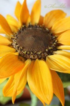 Sonnenblume aus Zucker von Floralilie - Gumpaste Sunflower