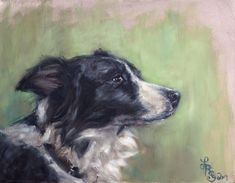Border Collie (Twobit) by Lydia Rose Awww Looks like My Macky Moo Cow!!