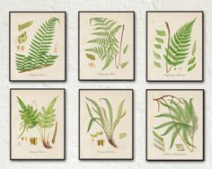 16x20 on canvas, 185. British Ferns Print Set 2 - Botanical Prints - Giclee Canvas Art Prints - Antique Botanicals - Poster -Multiple Sizes Starting at USD 75.00+