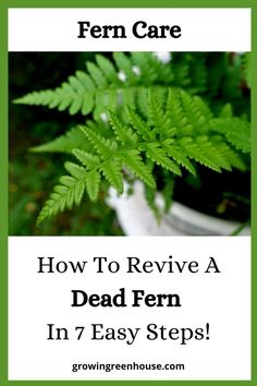 Types Of Ferns, Types Of Soil, Ferns Care, Potted Ferns, Household Plants, Greenhouse Growing, Fern Plant, Best Indoor Plants, Plants