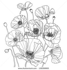 Coloring book with some poppies Poppy Drawing, Floral Drawing, Sketch Drawing, Botanical Line Drawing, Botanical Drawings, Poppy Coloring Page, Coloring Pages, Adult Coloring, Colouring