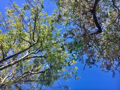"""My favorite point of view, the Earthling point of view. """"She had so deep a kinship with the trees, so intuitive a sympathy with leaf and flower, that it seemed as if the blood in her veins was not slow-moving human blood, but volatile sap.""""_ Mary Webbe"""